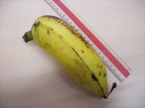 panjang 20 cm